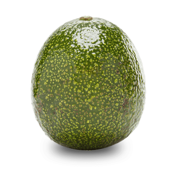 Reed avocados nz